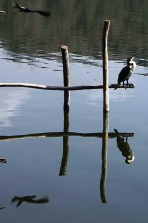 lake  ziway