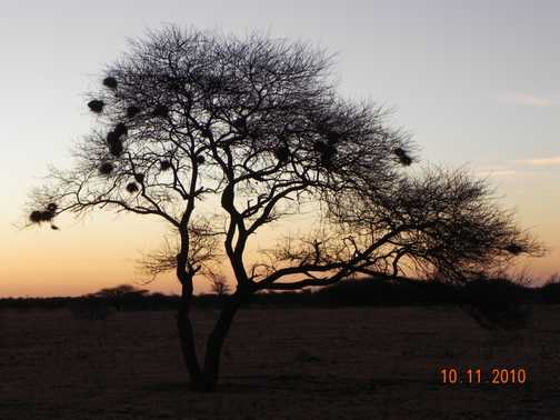 Moremi sunset
