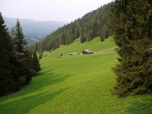 Obernbergtal Meadow