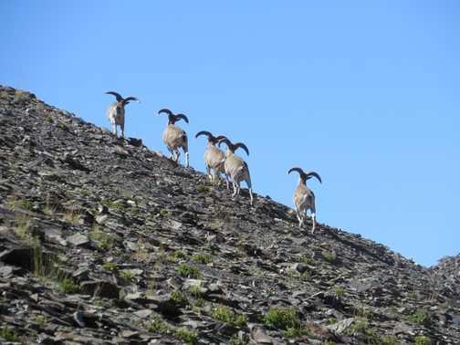 'Exodus Peak'