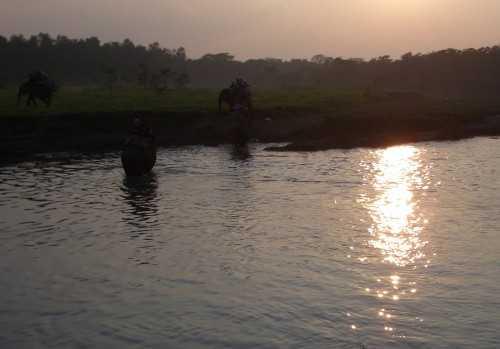 Elephnts at sunset