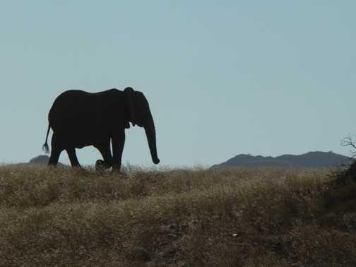 Lone Eli in Damaraland