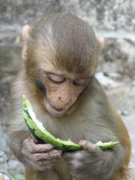 Monkey Temple, Kathmandu. New Years Day, 2066