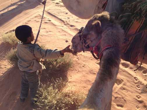 Little boy feeding the camel