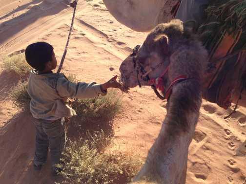 Little boy feeding the camel