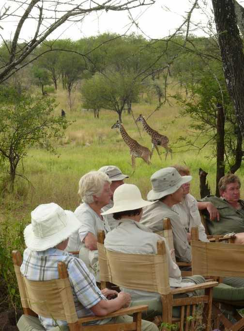 Talk with giraffes