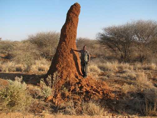 Jonas & termite mound