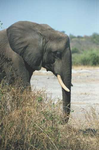 Kruger NP - Elephant