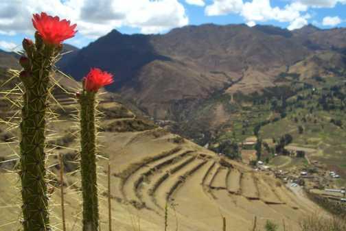 Prickly Peru