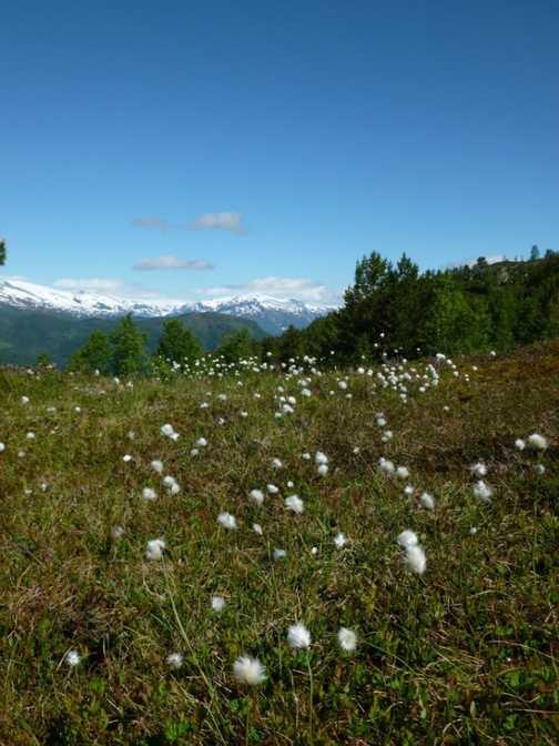 Wildflowers on Molden Peak