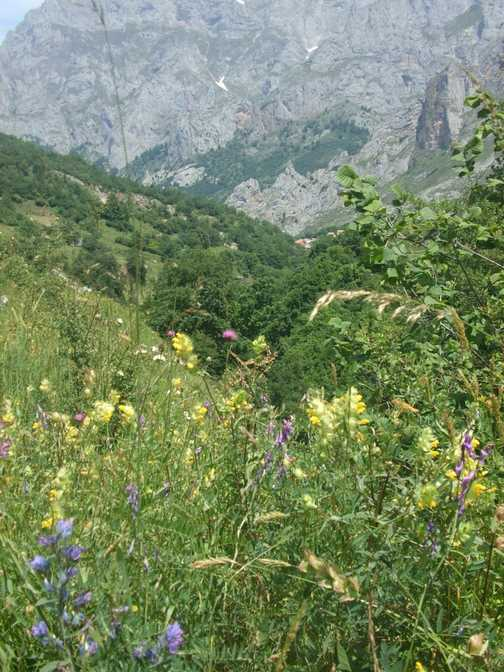 Wild flowers in the Picos!