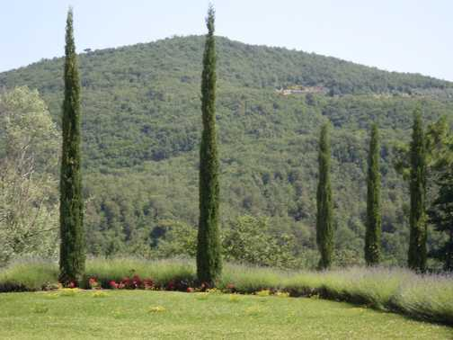 View from outside the Winery