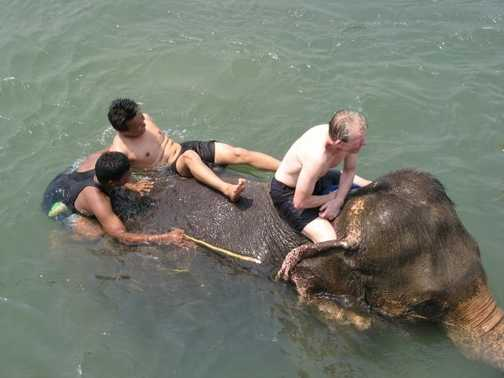 having fun with the elephant in chitwan