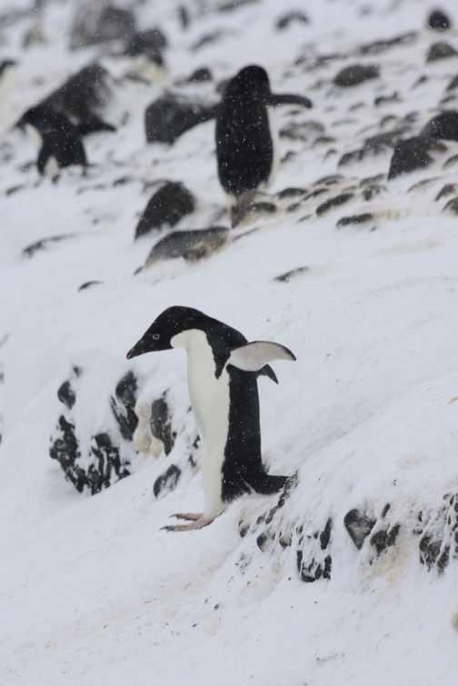 Gypsy Cove: Stanley - Falklands