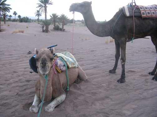 excellent mode of transport