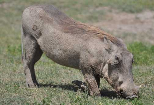 My favourite - The Warthog