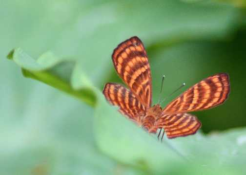 butterfly at camp 5 v2