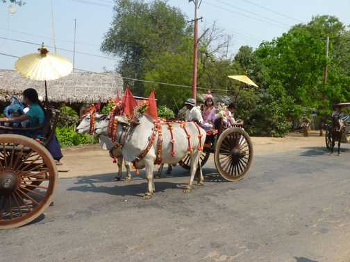 A new nun hauled by a bullock cart!