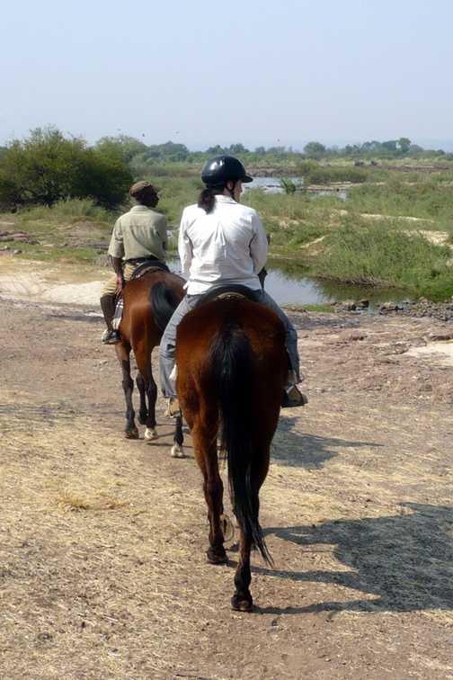 Elephants at the Maramba River - Zambia