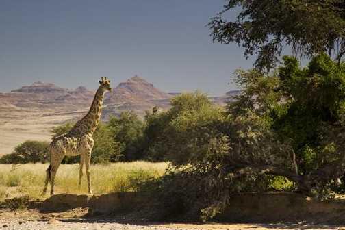 Namib Desert wildlife