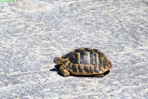 day 1 tortoise!