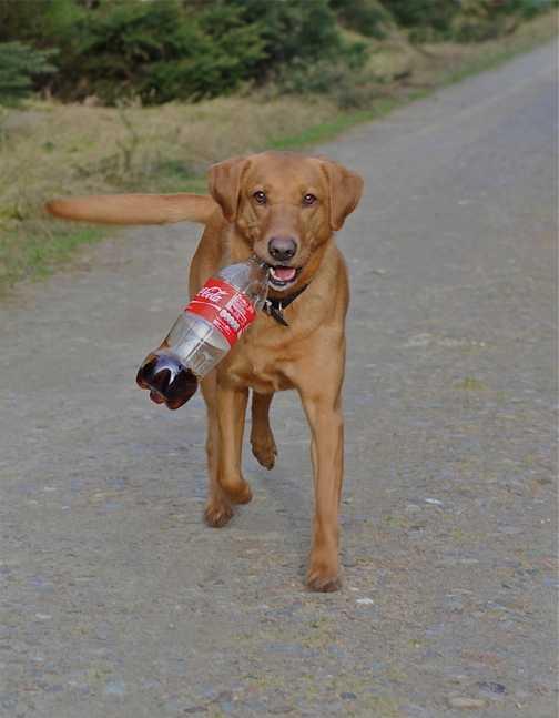 Belle on coke