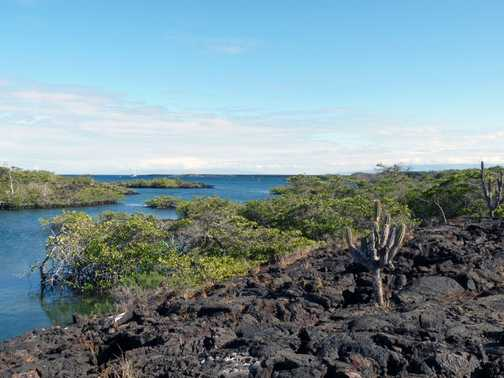 The route to our landing on Isabela Island. Mangroves and lava. Punta Moreno.