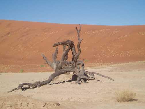 Nabib Desert