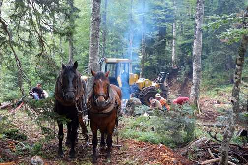Break time; loggers in a forest on the ascent of Bjelasnica.