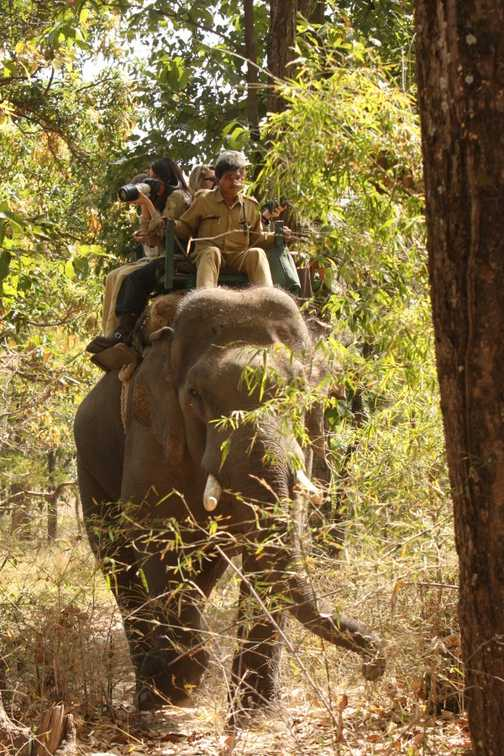 Elephants provide transport to view tigers