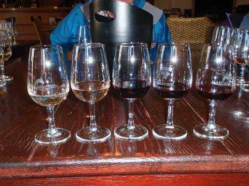 Wine tasting - Stellenbosch