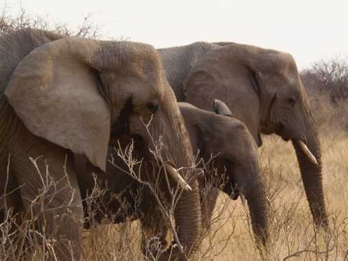 Elephants passing by