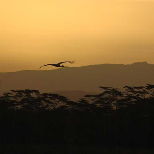 Sunrise in Nakuru