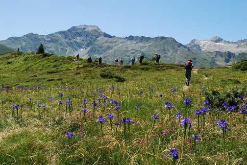 Walking through Irises