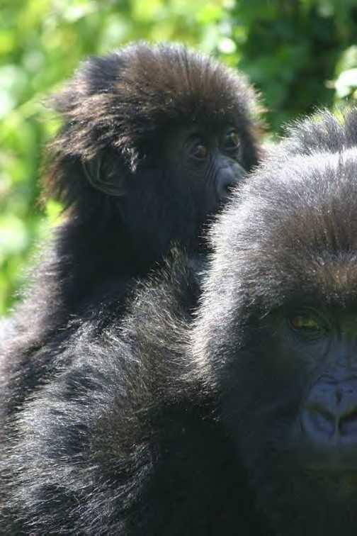 Mom and her baby Rwanda