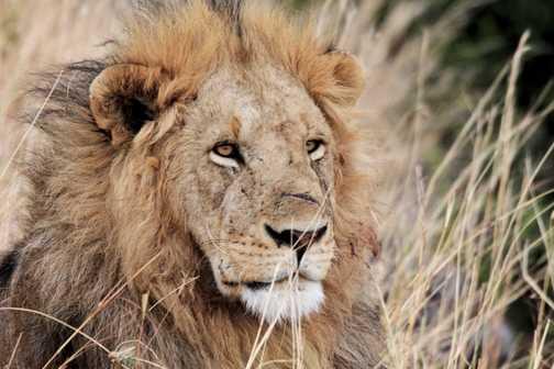King of the Masai