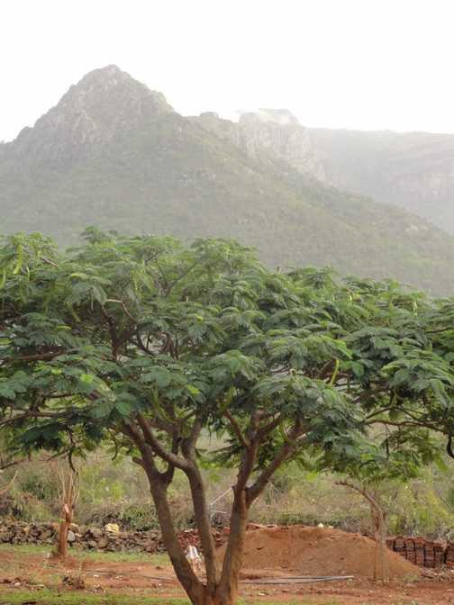 Ooty mountain