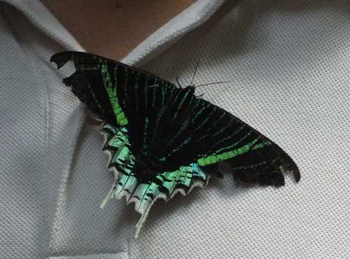 Blue and Green Moth