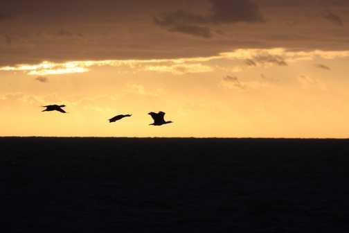 sunrise at cape horn