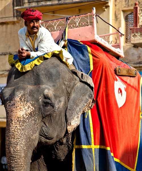 Elephant at Amber Palace