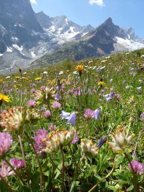 Alpine Meadows and Peaks