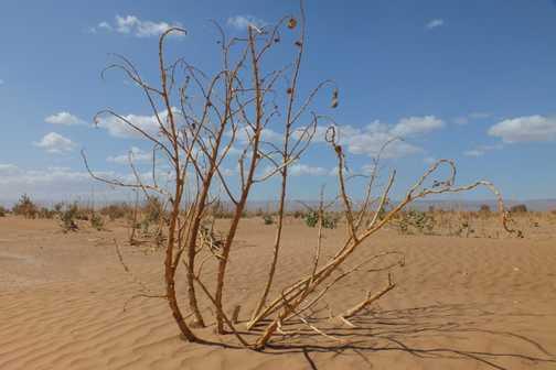 Saharan flora!