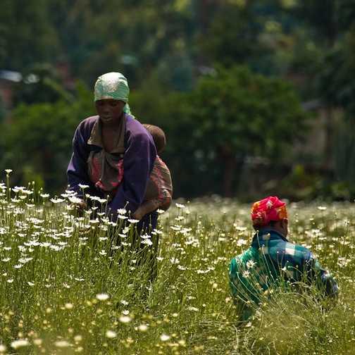 Proximity, Rwanda