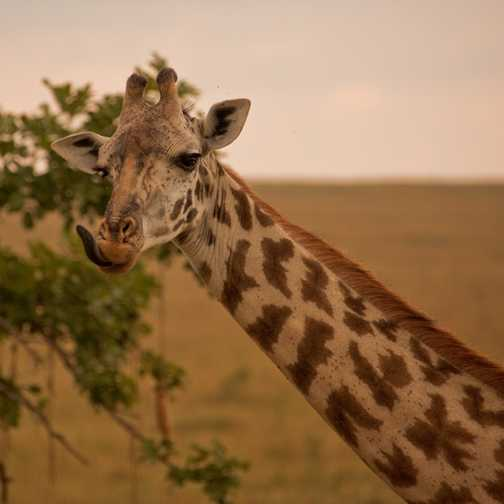 Jeffrey, Masai Mara