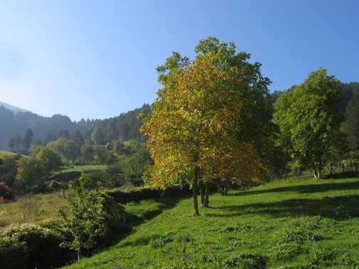 Autumn in Trigrad Gorge_3