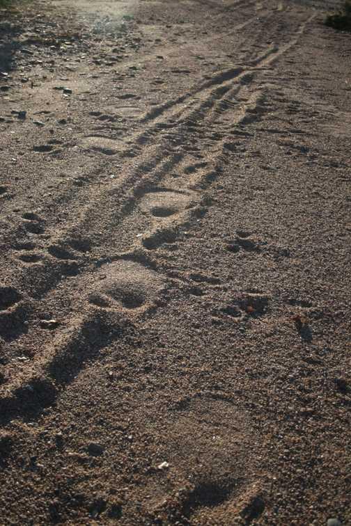 elephant footprints