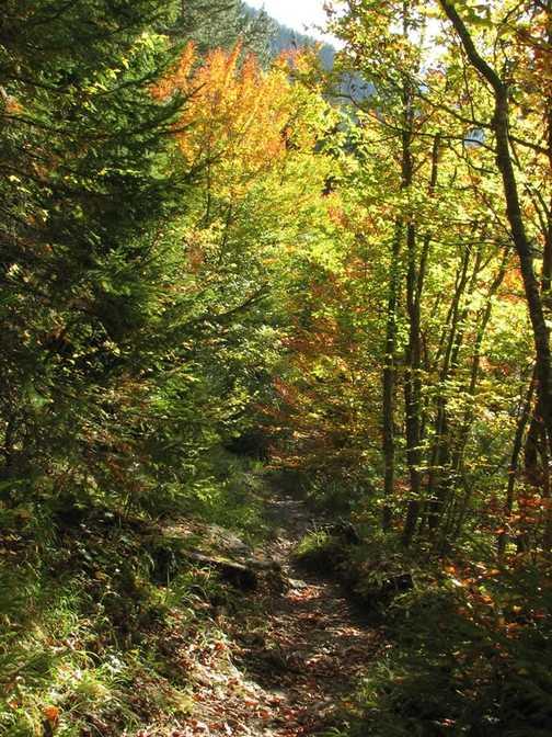 Autumn on Trail to Yagodina Cave