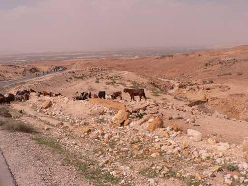 heading for the Dead Sea