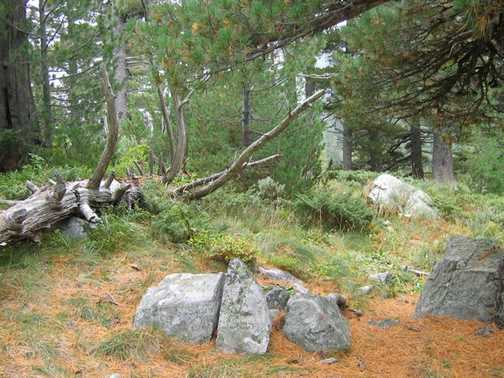 Pirin Ancient Forests_1