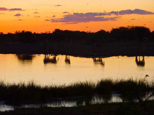 Waterhole at sunset - Etosha